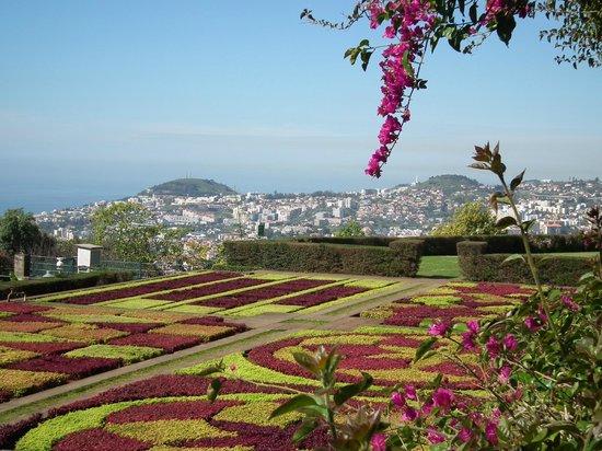 Madeira Botanical Garden : Carpet bedding and view, Jardim Botanico