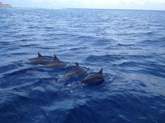 Cinnamon Dhonveli Maldives : dolphin safari