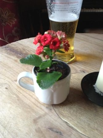 The White Lion: teacup flower