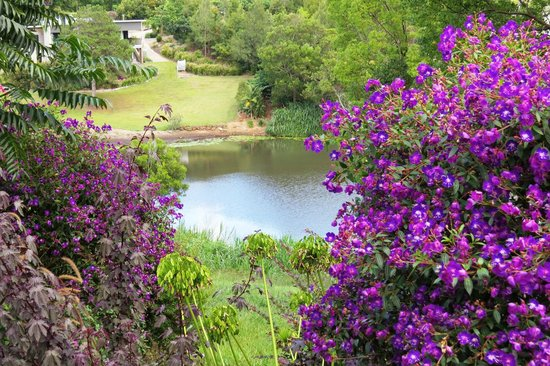 Allara Homestead Bed & Breakfast: Gardens and pond