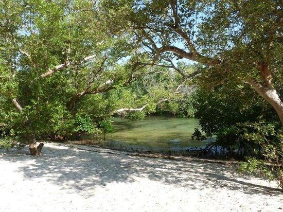 Shamba Kilole Eco Lodge : Mangroven