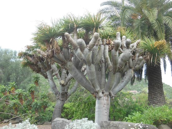 Jardin botanico canario picture of jardin canario las - Jardin botanico las palmas ...