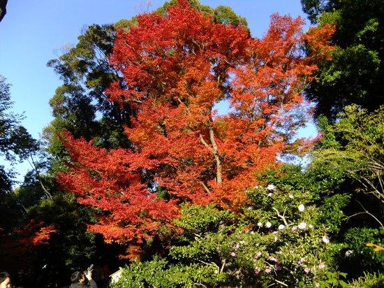 Tokugawa Garden: 入口の紅葉