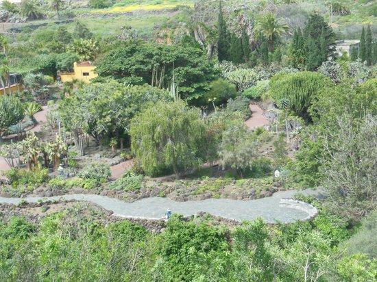 Jardin botanico canario kuva jardin botanico viera for Jardin canario