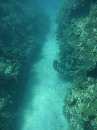 Dreamtime Dive Center: Reef dive
