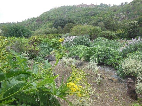 Jardin Botanico Canario - Picture of Jardin Canario, Las Palmas de Gran Canar...