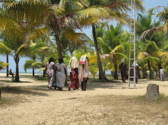 Marari Beach Resort : la palmeraie de l'hôtel