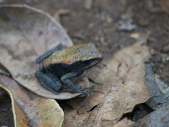 Periyar Tiger Reserve: Frog