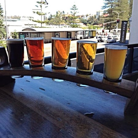 4 Pines Brewing Company: Taster