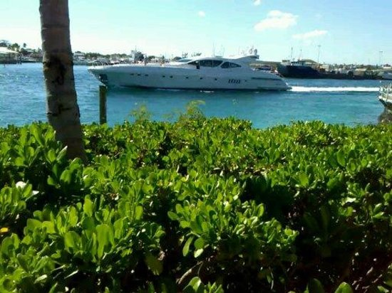 Paradise Island Harbour Resort All Inclusive: Amazing motor Boats pass by all day