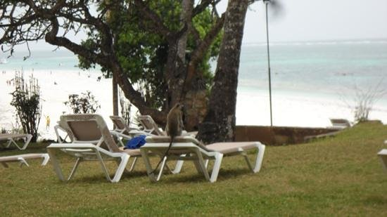 Baobab Beach Resort & Spa : beautiful views
