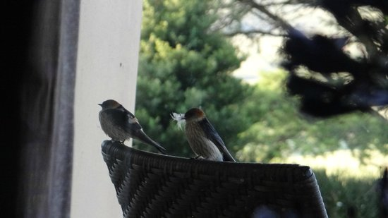 Montusi Mountain Lodge: Inquisitive visitors just outside the window