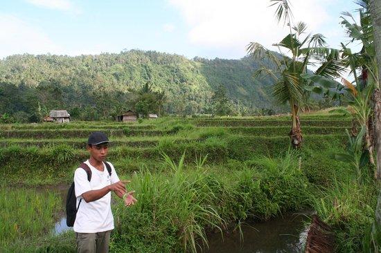 Surya Shanti Villa: promenade dans les rizières