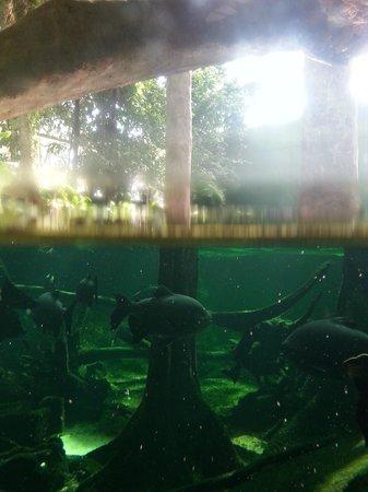 CosmoCaixa Barcelona: In the rainforest