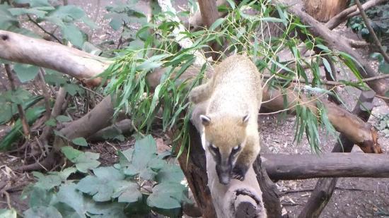 Photo of Melbourne Zoo taken with TripAdvisor City Guides