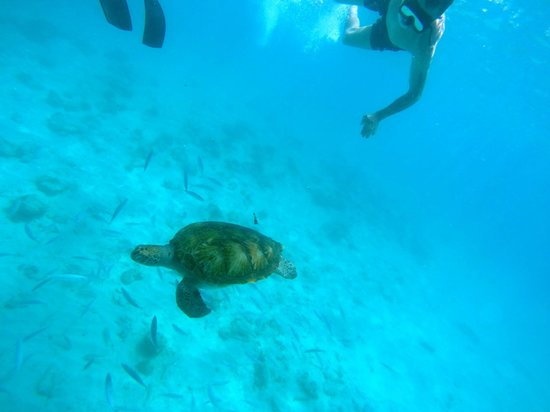 Small Cats Catamaran Sailing Cruises: This is me swimming with the turtles. Notice I'm not wearing fins like the other guy.