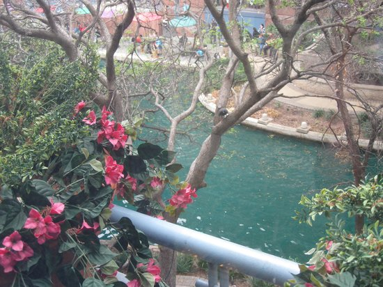 River Walk: View from the River Center Mall