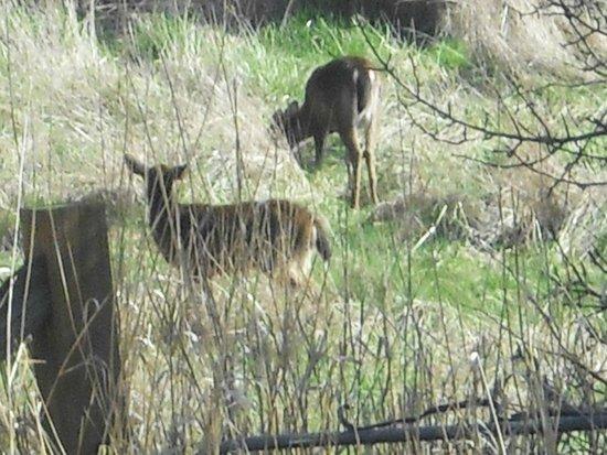 Deer Harbor Inn: Deer from the hot tub.