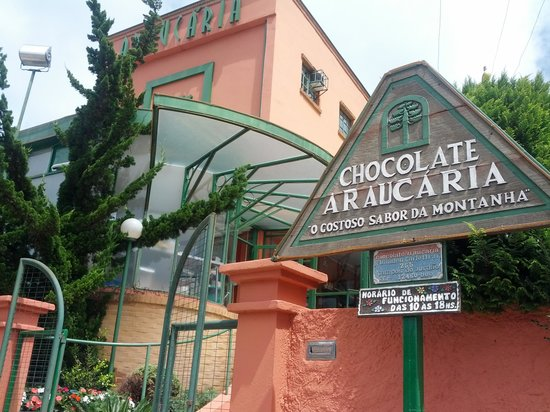 Chocolate Araucaria
