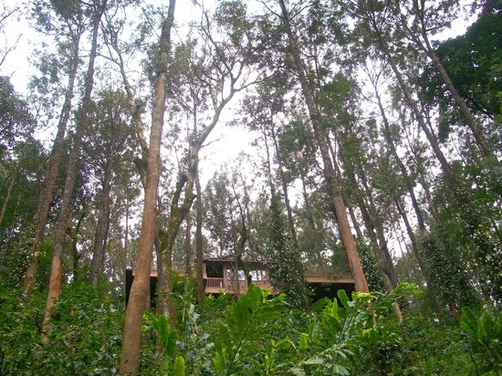 The Tamara Coorg: The beautiful cottage nestled above
