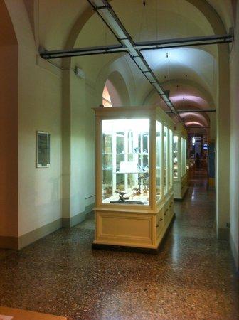 University of Florence Natural History Museum : Museo di Storia Naturale dell'Università di Firenze, una sala