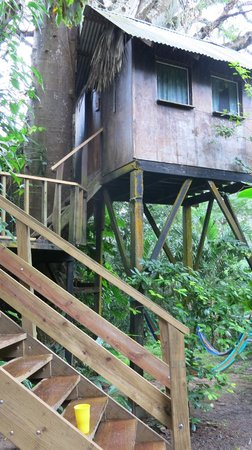 Parrot Nest Lodge : The tree house we stayed in