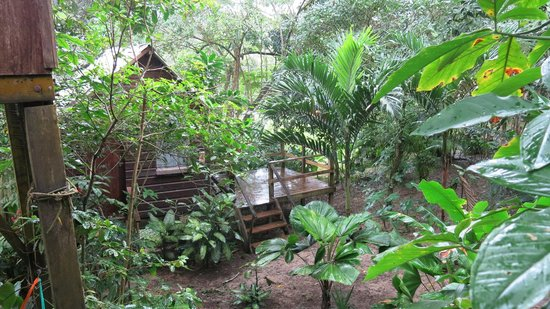Parrot Nest Lodge: View from our treehouse
