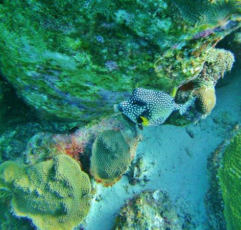 Buddy Dive Resort Diving: Bonaire dive