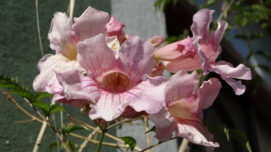 La Casa del Atrio: Flowers in the Courtyard