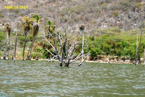 Lake Enriquillo (Lago Enriquillo): Vegetacion y humedales de categoría mundial.