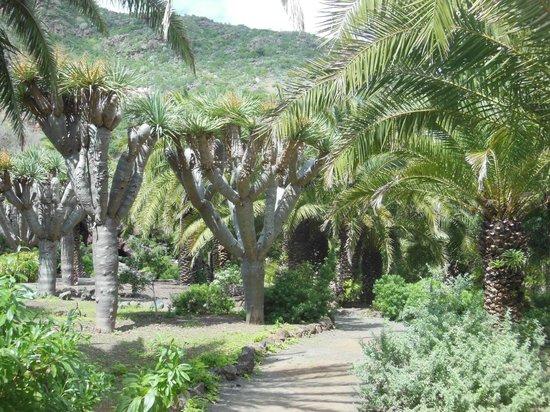 jardin canario picture of jardin canario las palmas de