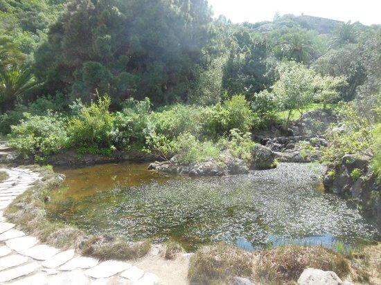 Jardin Canario - Picture of Jardin Canario, Las Palmas de Gran Canaria - Trip...