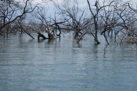 Lake Enriquillo (Lago Enriquillo): Parte lacustre