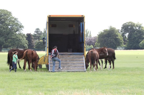 Phoenix Park: Polo Ponies before the match