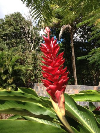 Malecon House: one of the beautiful flowers on the property