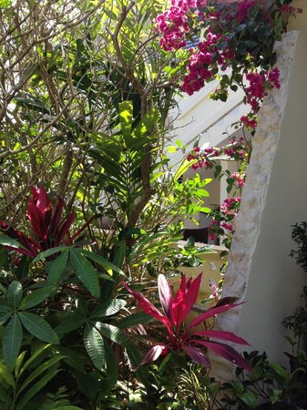 Malecon House: More flowers on property