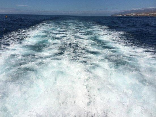 Lady Shelley: Красивые виды на океан