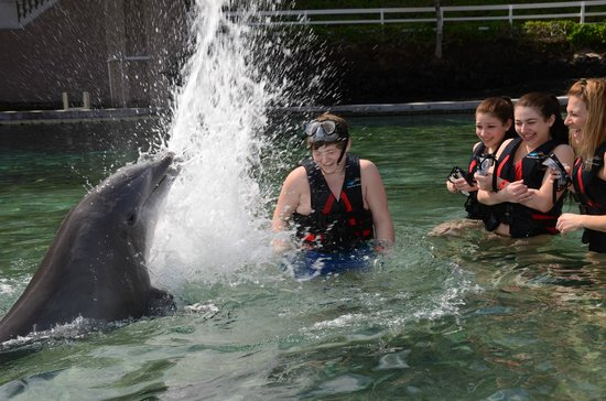 Dolphin Quest: A SPLASH CLAP CELEBRATION