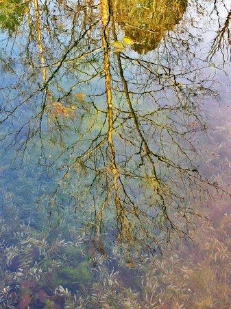 Onondaga Cave State Park: Crystal clear pond at Onondaga Cave SP