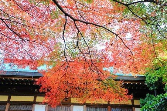 Hokokuji Temple (Takedera Temple): Hokoku-ji Temple