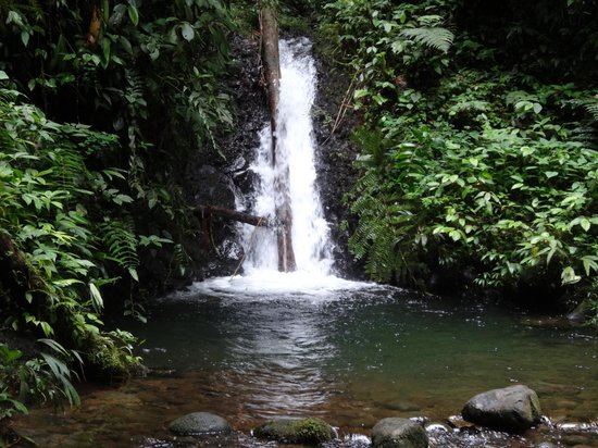 San Jorge de Milpe Eco-Lodge Orchid & Bird Reserve: waterfall