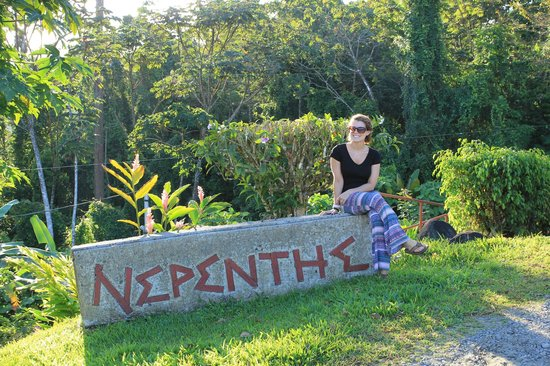 Nepenthe B&B: The entrance