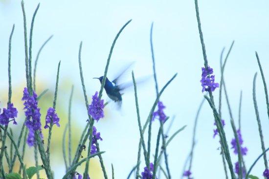 Nepenthe B&B : Hummingbird