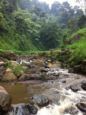 Madakaripura Waterfall: on the way