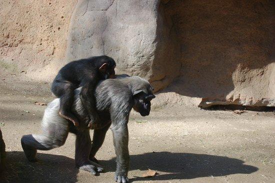 Zoo de Barcelona: Зоопарк в Барселоне