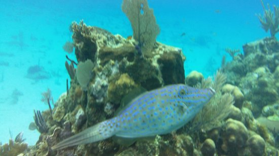 West Bay Beach: beautiful snorkeling