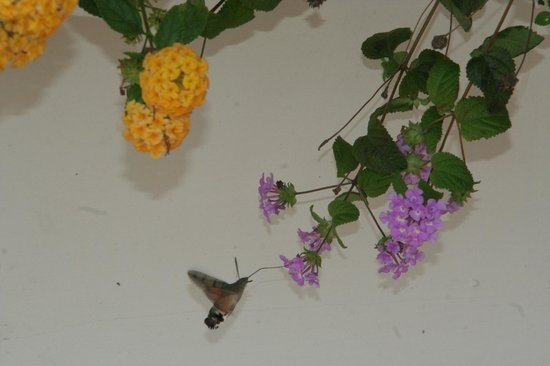 Hotel San Francesco al Monte: Flowers & tiny hummingbird