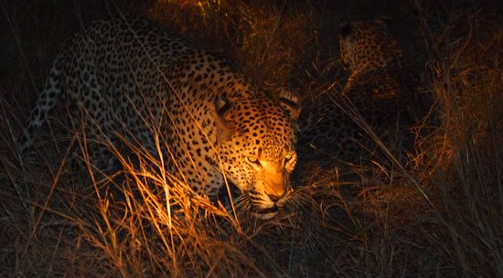 Tydon Safari Camp : leopard