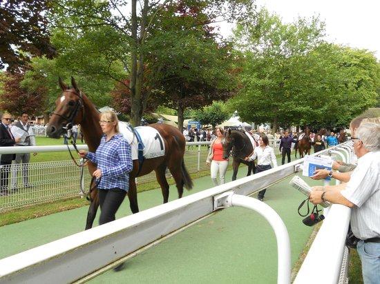 Hippodrome Deauville La Touques : Présentation chevaux