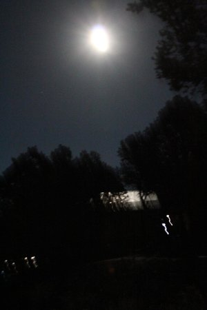 Georgetown Cabins Resort : Night Time View